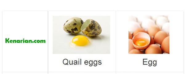 Manfaat telur puyuh untuk kenari
